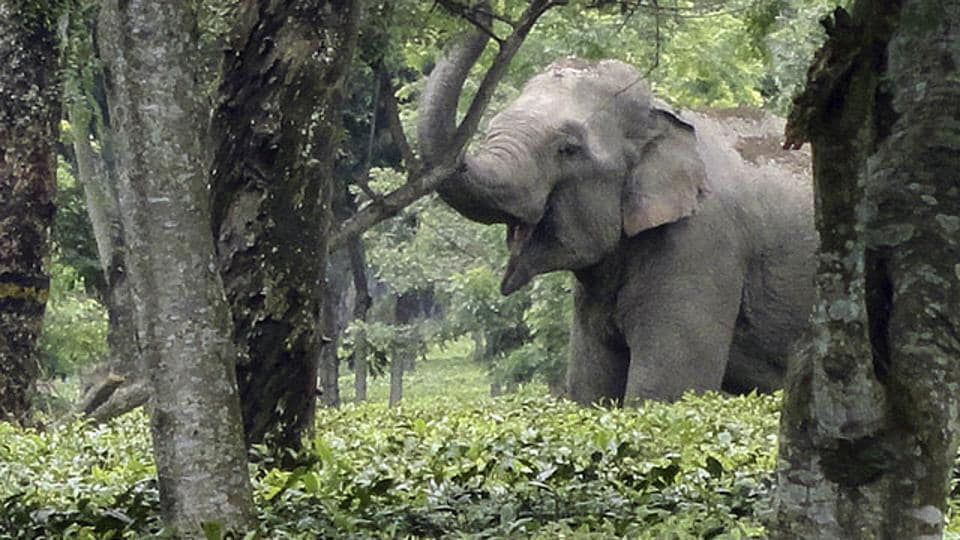 The elephant strayed into the CRPF camp at Taralu village from the adjacent Savandurga forest.