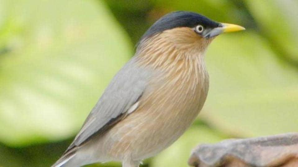 birds in Mumbai,dehydrated birds,green cover in Mumbai