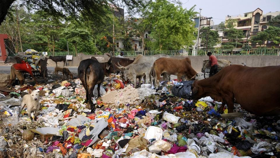 FONRWA has also decided to survey all sectors of Noida and award the cleanest sector.