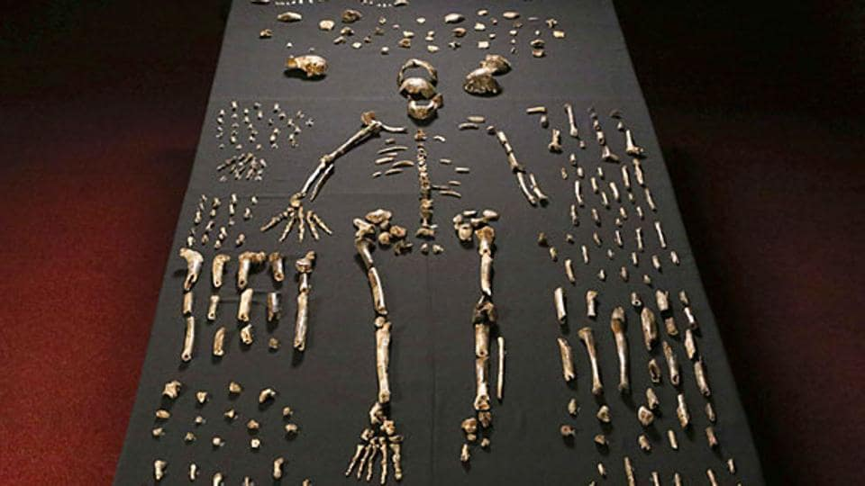 The question of when Homo naledi went extinct, and why, remains unanswered.