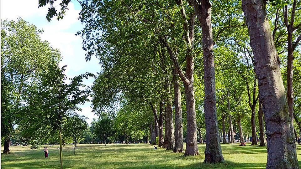 A part of the Hyde Park in London.