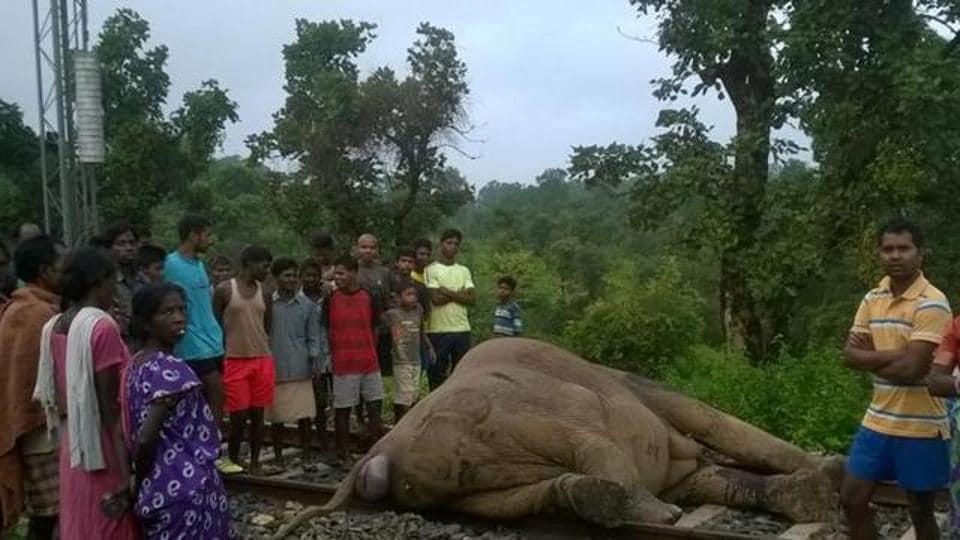 Elephants,Killed,Trains