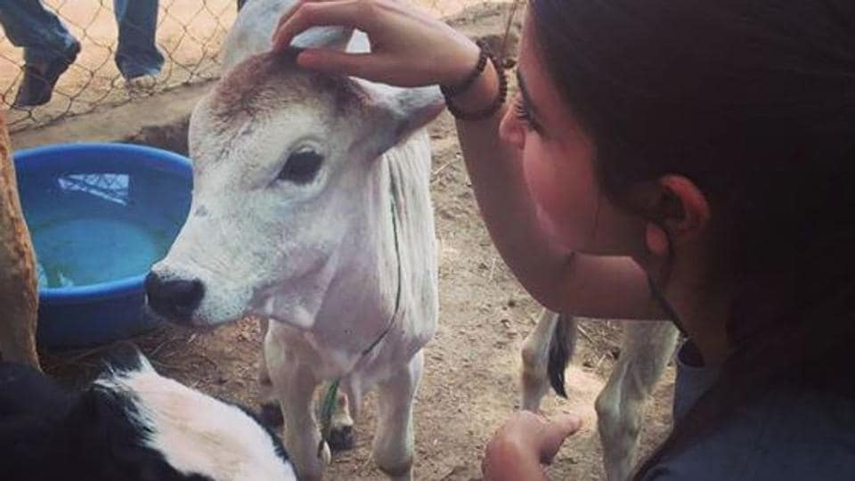 Actor Anushka Sharma recently spent a day at Udaipur's animal rescue and shelter.