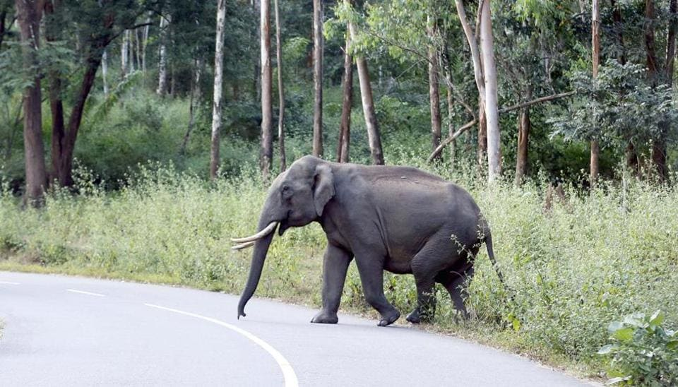 As Kerala is slipping into an unprecedented drought man-animal conflict has risen sharply. Wild animals like elephants have started raiding human settlements frequently.
