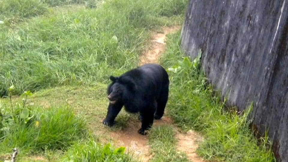 he latest trend of targeting mother and baby bears in the Himalayan state was tracked by TRAFFIC India.