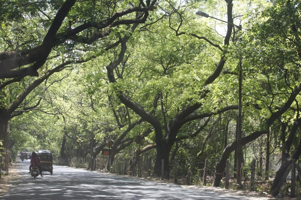 More than 2,000 trees may have to be cut to make space for the metro car shed at Aarey Colony.