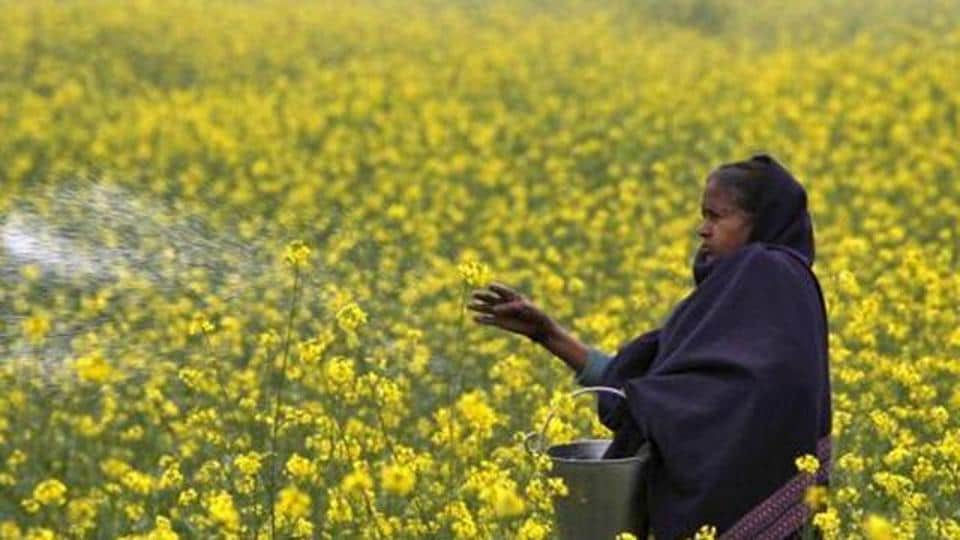 Permit genetically modified mustard cultivation — Go with GM