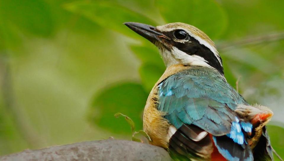 summer bird count,eBird,Global Big Day