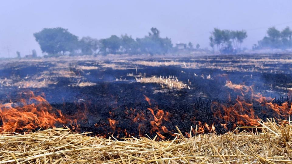 Despite ban, farmers continue to burn stubble in Tarn Taran on Wednesday.