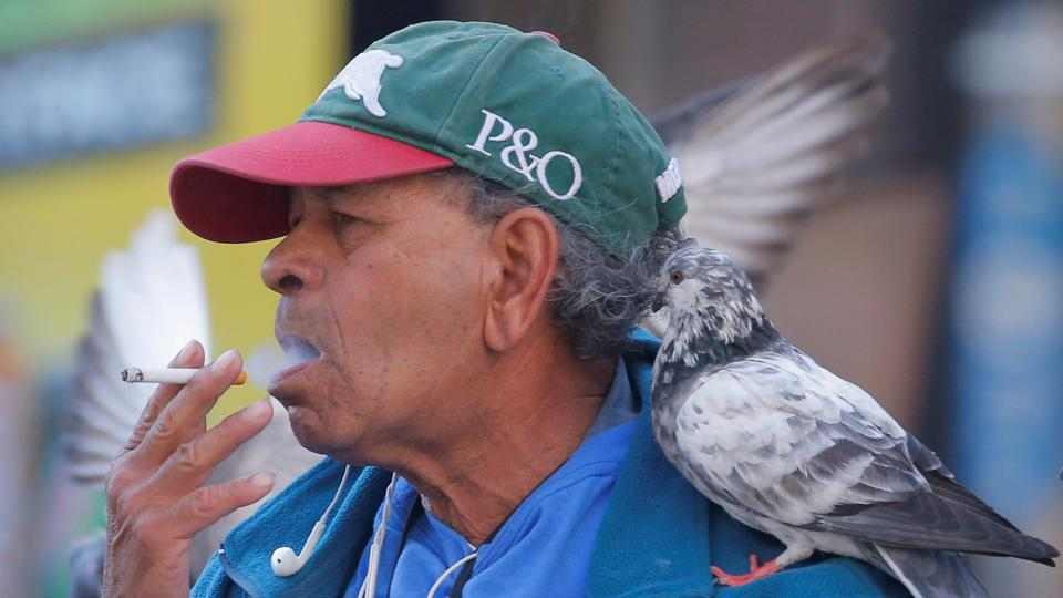 A pigeon sits on the shoulder of a man as he smokes a cigarette in Sydney, Australia, on May 11, 2017.