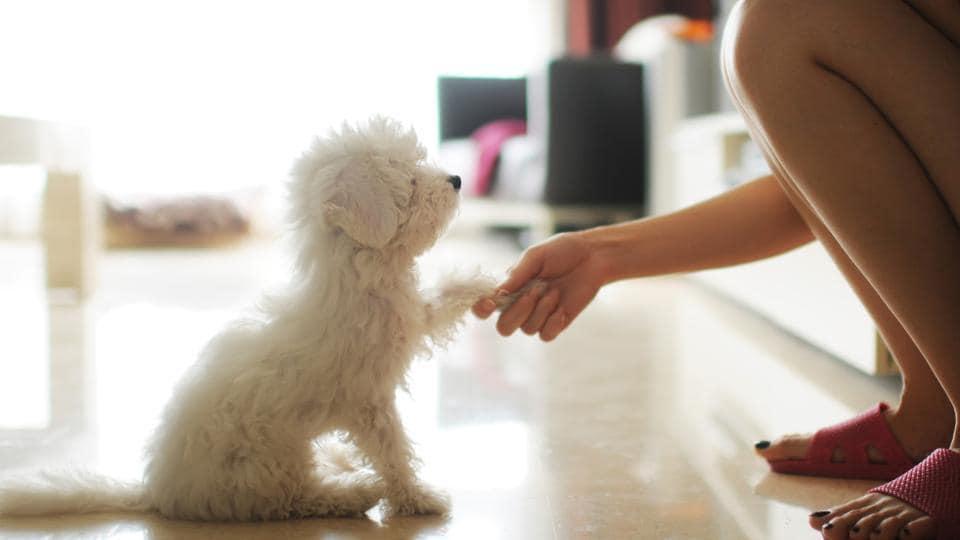 Pet,Pet dogs,Pet dogs to kill stress