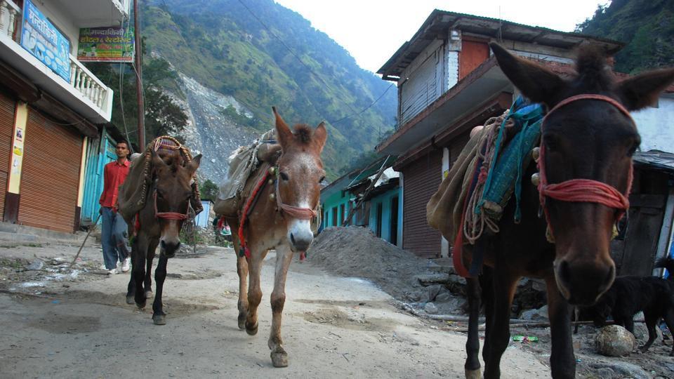Uttarakhand,Kedarnath,Mule operators