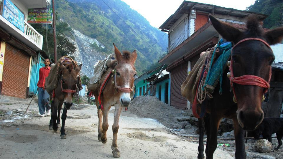 Mule operators carry pilgrims from Sonprayag to the Kedarnath shrine, traversing one of the most steep terrains of the Himalayas.