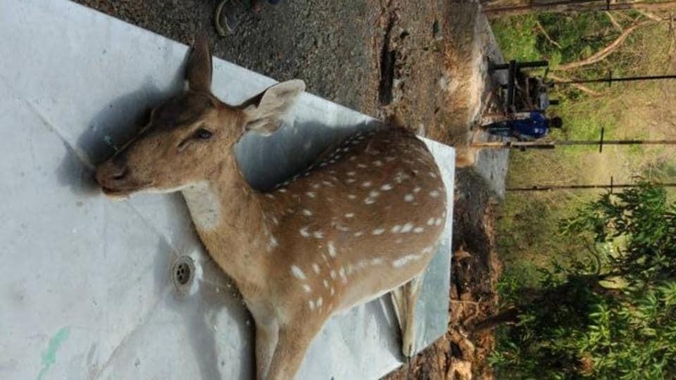 deer death,SGNP,Western Express Highway