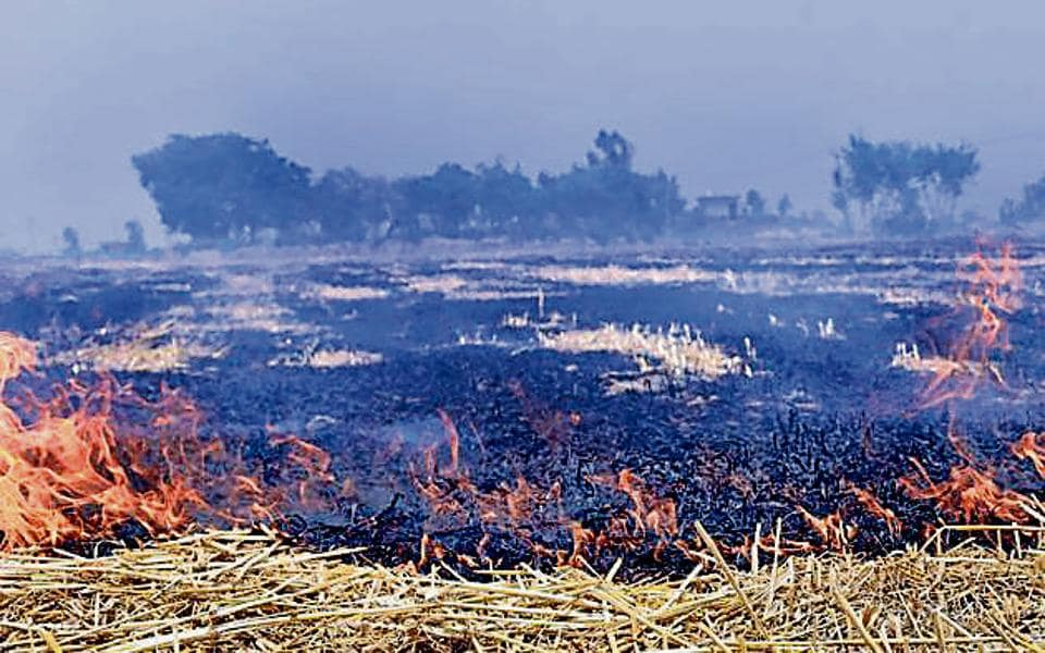 As per the Punjab Remote Sensing Centre survey, 1,124 cases of residue burning have been detected in Amritsar.