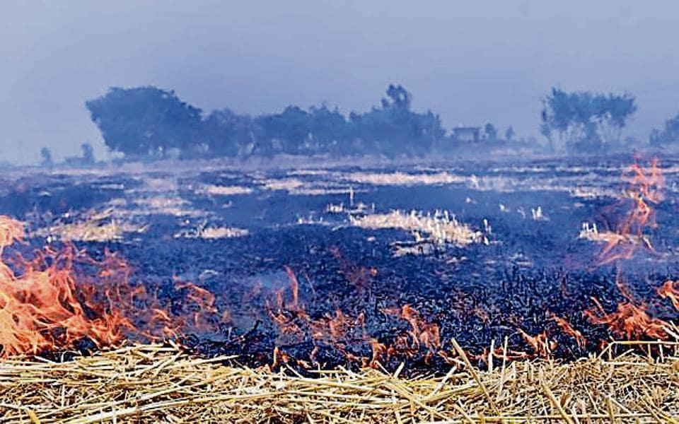 Stubble burning,Tarn Taran,Punjab farmers