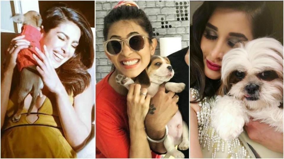Celebrity Pet Accounts,Instagram,Celebrity Pets