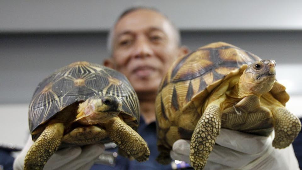 Malaysia,Tortoise,Kuala Lumpur International Airport