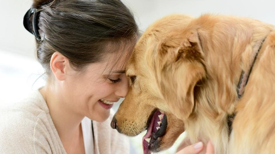 During the study, 40 volunteers listened to different growls recorded from 18 dogs.