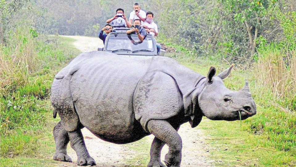 The NGT had ordered demolition of roadside shops and eateries along the animal corridors near Kaziranga.