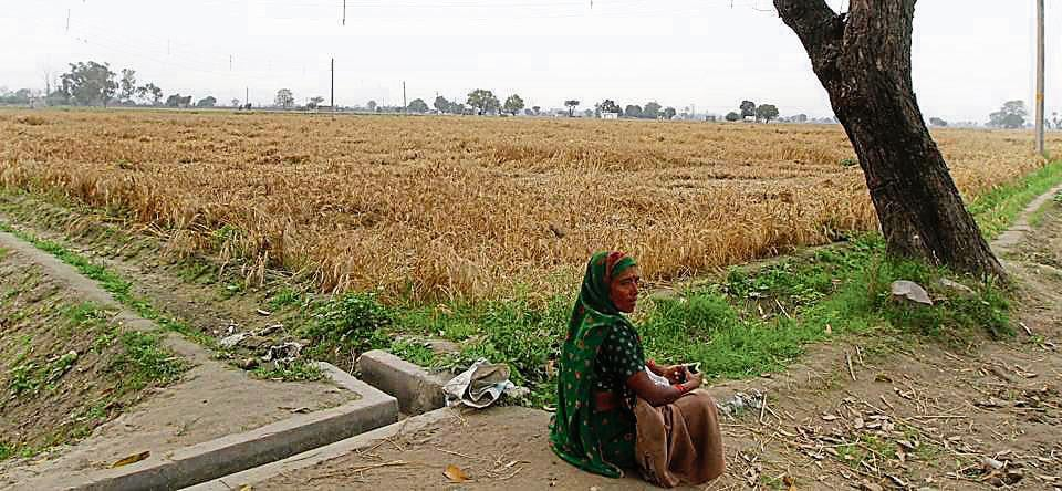 The villages declared urbanised are spread across the North and South Municipal Corporations. While 50 villages are under North MCD, 39 fall under the jurisdiction of the South MCD.