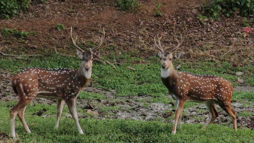 392 spotted deer were seen this year on Buddha Poornima.