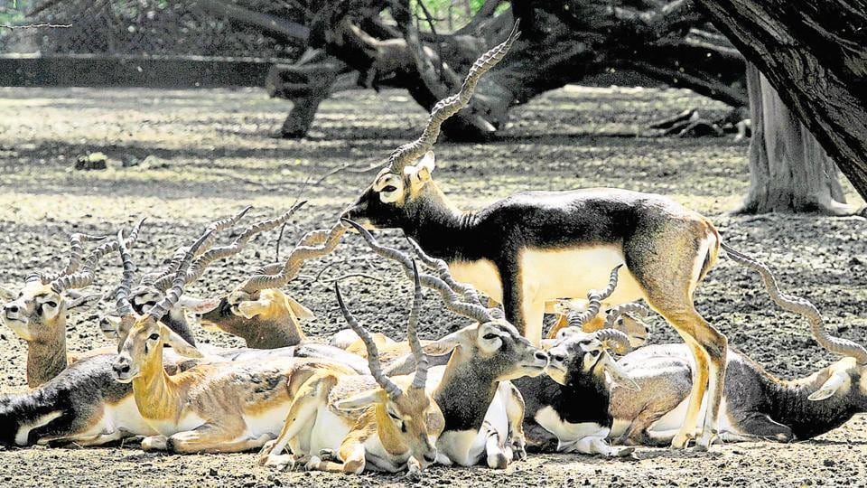 Delhi Zoo Records Highest Mortality In India Animals Dead - 17 zoo animals happy see visitors