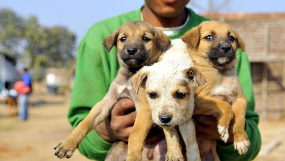 Puppies,Animal rights,FIR
