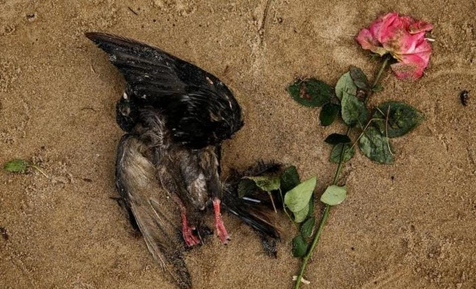 A dead bird lies next to a rose on the bank of the River Thames in London during low tide. Photographer Stefan Wermuth spent months photographing the river and the abandoned objects collected on the shore. During the heights of British Empire, it was a major trading route with factories set up on its banks but lost its prominence when the empire declined.  (Stefan Wermuth/Reuters)