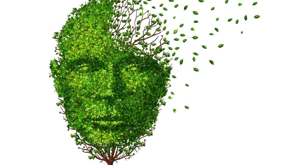 In Alzheimer's disease, clumps of a protein called amyloid form around nerve cells in the brain.