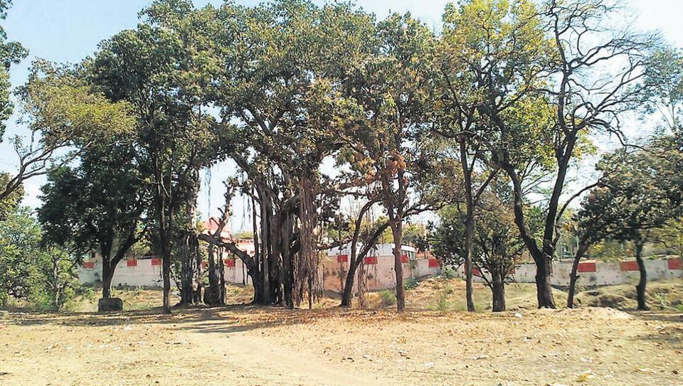 An ancient banyan tree in Jhabua, Madhya Pradesh.