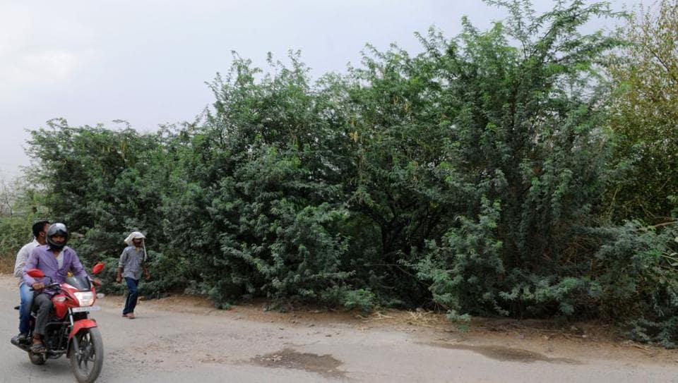 Aravali forest