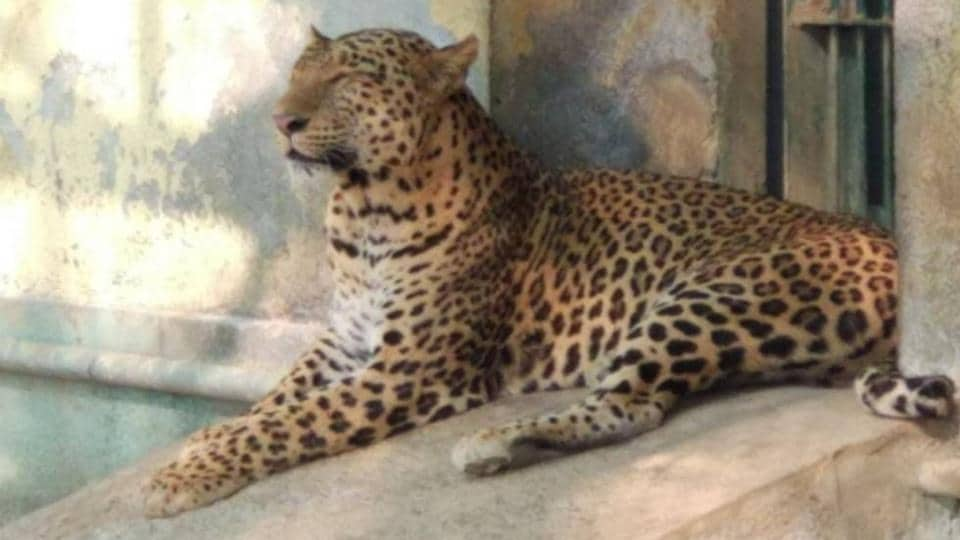 Radha was brought to SGNP from Radhanagri in Maharashtra's Kolhapur in 2004 at the age of four.