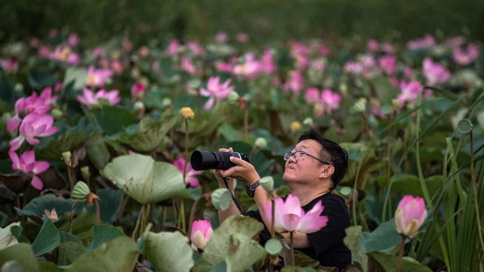 A tourist takes a photograph of lotus flowers while riding in a canoe through a lake in the Khao Sam Roi Yot national park in southern Thailand.