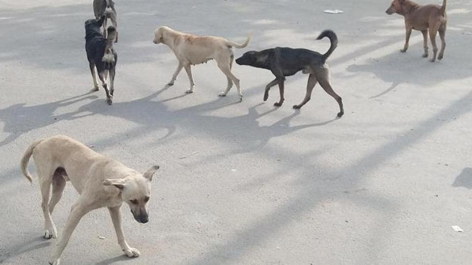 Fisherman mauled to death by stray dogs