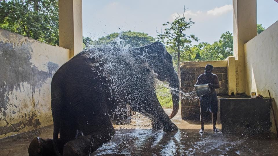 A mahout bathes an elephant at Byculla zoo.