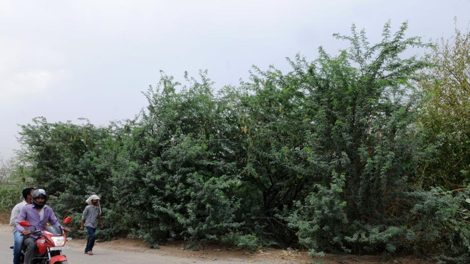 Gurgaon,Aravalli hills,enviromentalist
