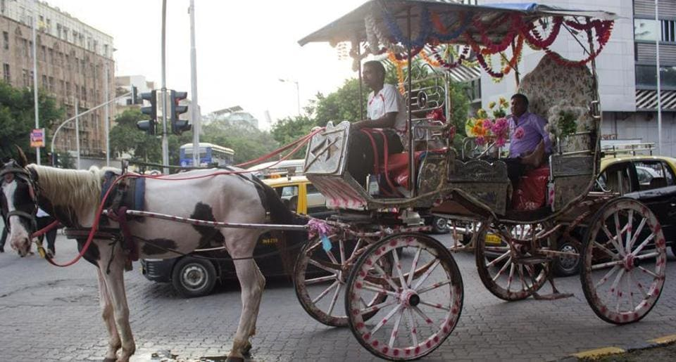 Mumbai city news,Victoria,horse-drawn carriages