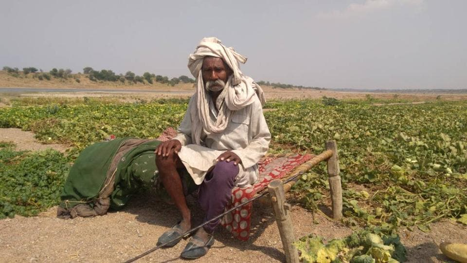 Ramprakash Yadav, a 75-year-old farmer, sits on a cot amid seering sand guarding the vegetable planted on the bed of river Betwa.