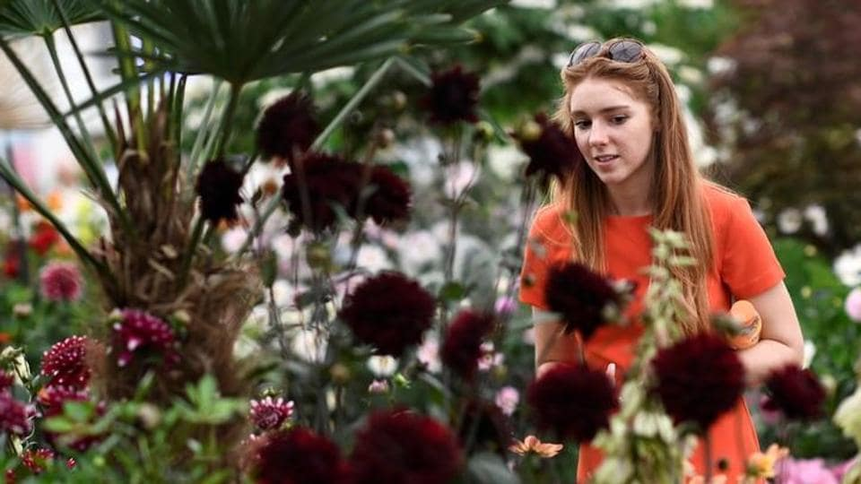 The show, which is organized by the Royal Horticultural Society (RHS), run from May 23-27, and is expected to draw around 165,000 visitors.