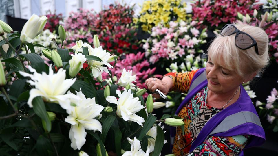 An exhibitor prepares a display of lillies. (Neil Hall / REUTERS)