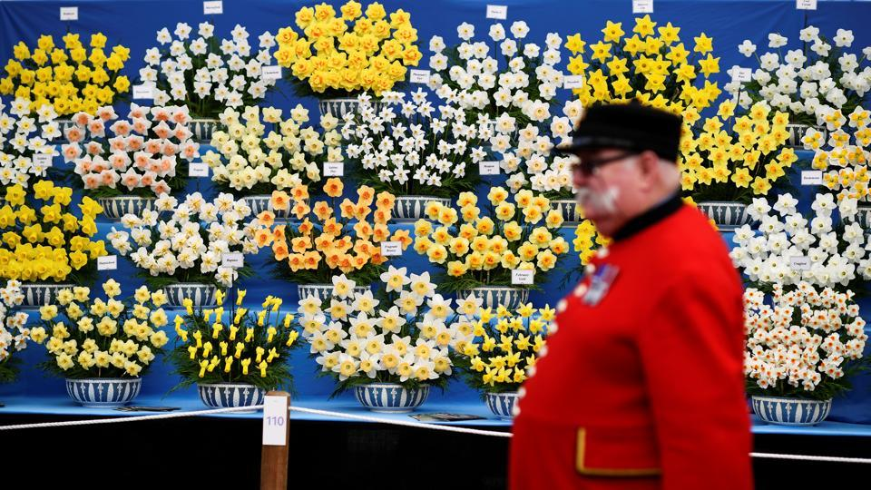A Chelsea Pensioner walks past a display of daffodils. (Dylan Martinez / REUTERS)