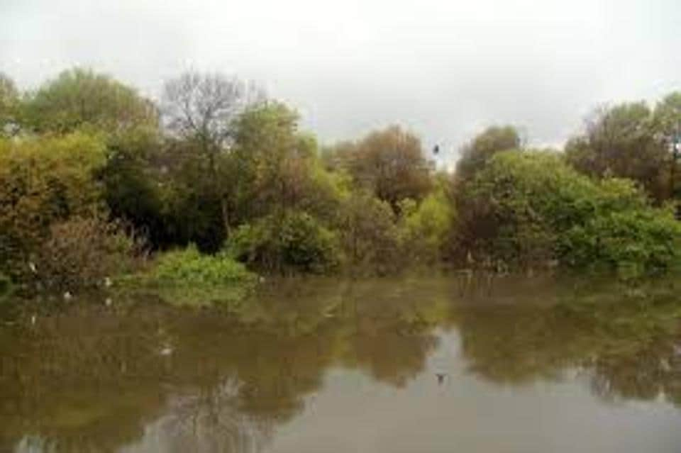 The official added that they had visited the mangrove patch twice to check if felling trees could be avoided but realised that according to the city's entire metro plan, the mangrove trees would have to be cut.