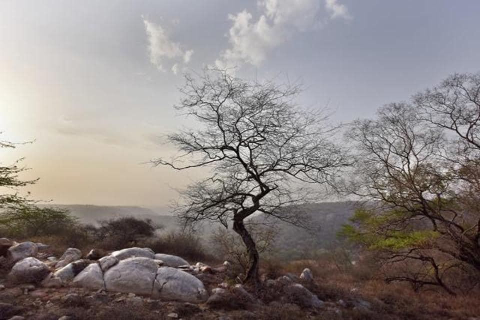 Mangarbani forest