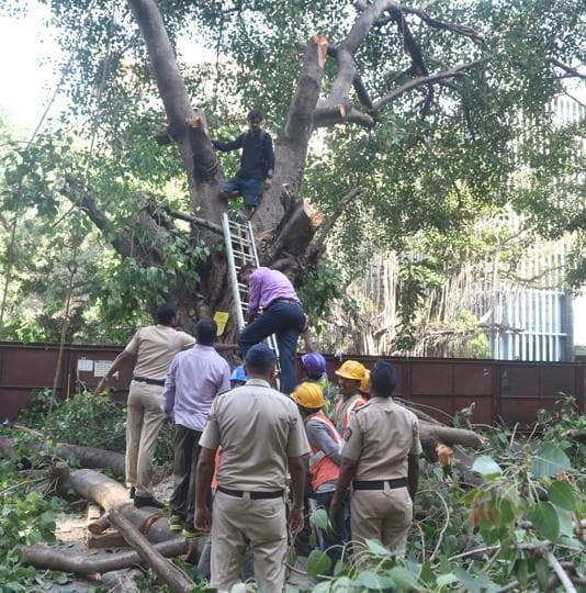 A man climbs a tree to protest against the felling of it for the Metro-3 work.