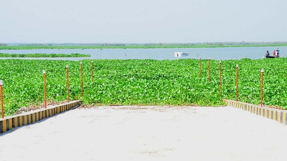 Harike Lake