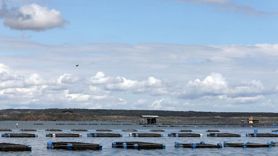 Tanks of tilapia fish are seen in Castanhao dam where the fish are cultivated. (REUTERS)