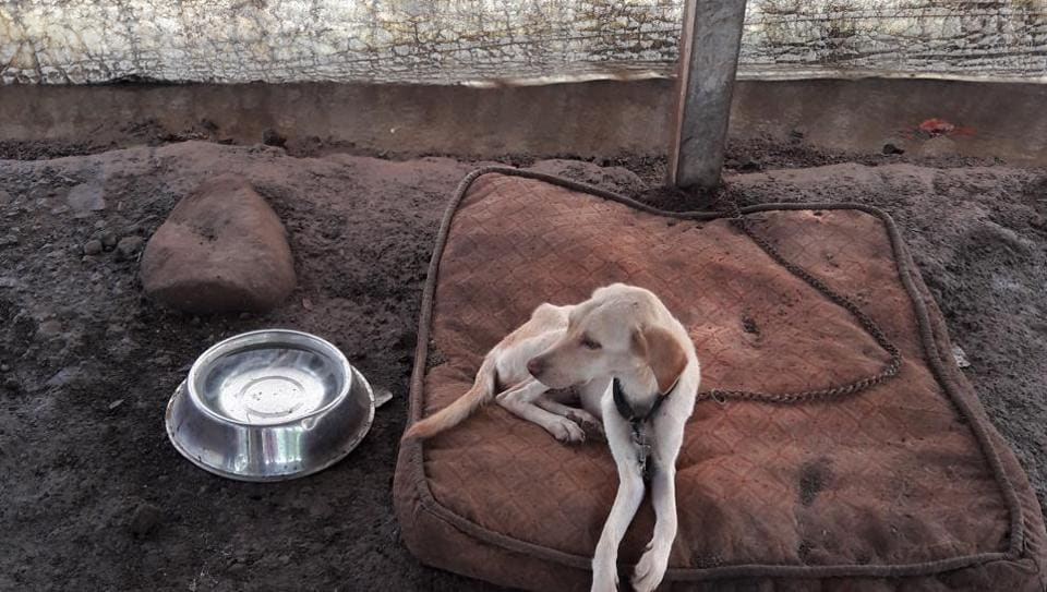 Animal cruelty cases is rampant in Mumbai with 19,028 cases registered between 2011 and 2016, or about 4,000 a year.