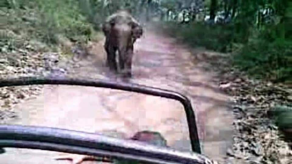 Tourists and vehicles moving dangerously close to wild animals are often chased by them.