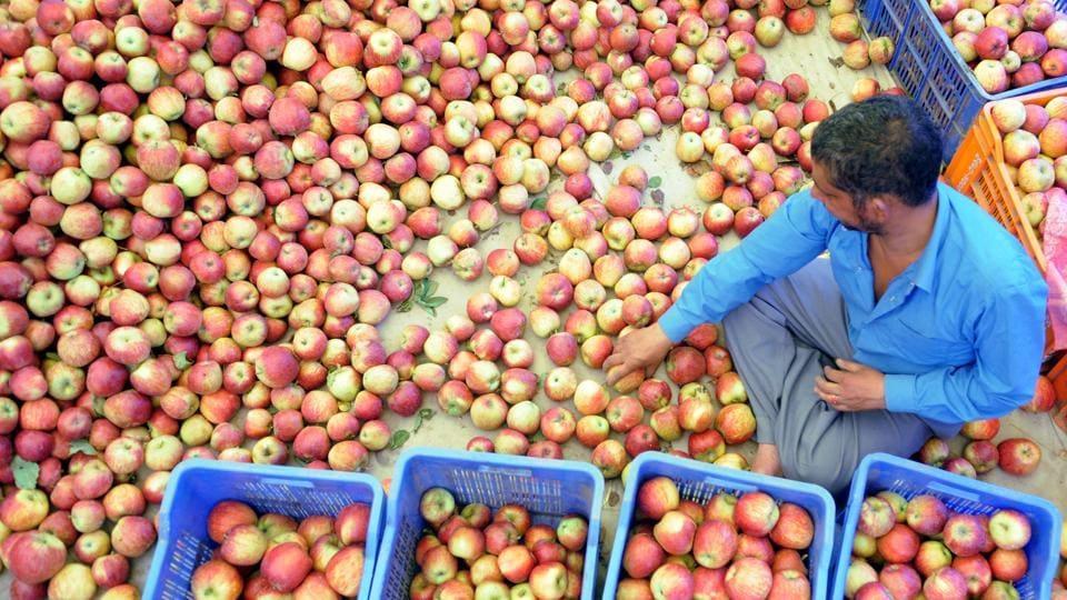 Apple orchards in Himachal Pradesh